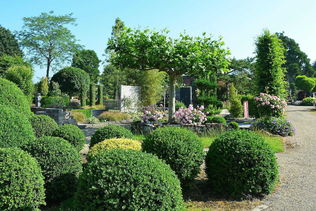 Durch Die Steigenden Temperaturen Und Wohlige Warme Entwickeln Sich Pflanzen Straucher Im Wonnemonat Mai Sehr Schnell Wer Garten Bewohner