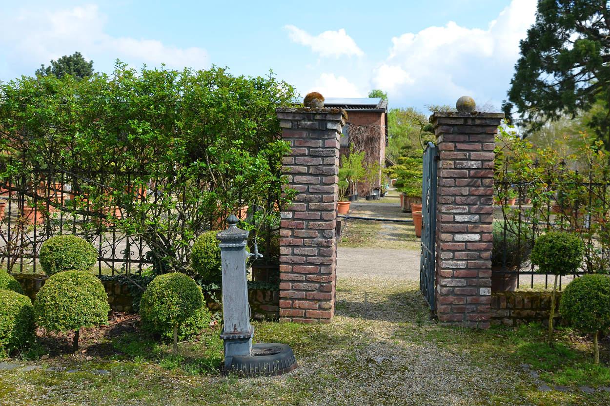 Eine Hecke Als Grunes Band Entlang Des Gartens Oder Grundstucks Ist Optisch Schone Sache Und Der Perfekte Schutz Ihrer Privatsphare